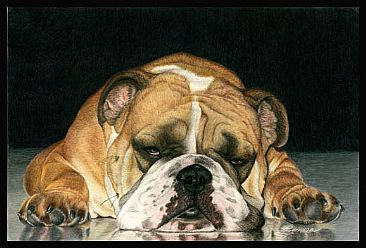 English Bulldog Painting Art By Gemma Gylling