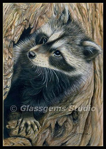 Hiding Place - Raccoon by Gemma Gylling