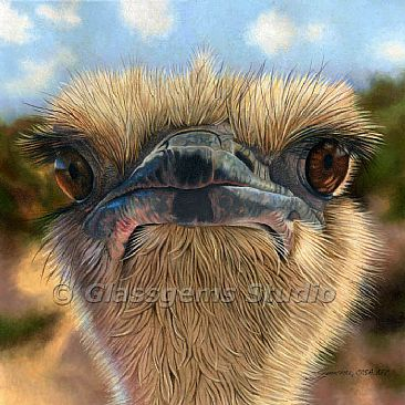 Here's Lookin' at Ya' - Ostrich by Gemma Gylling