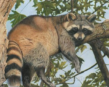 Raccoon - Painting Art by Gemma Gylling Raccoon Painting