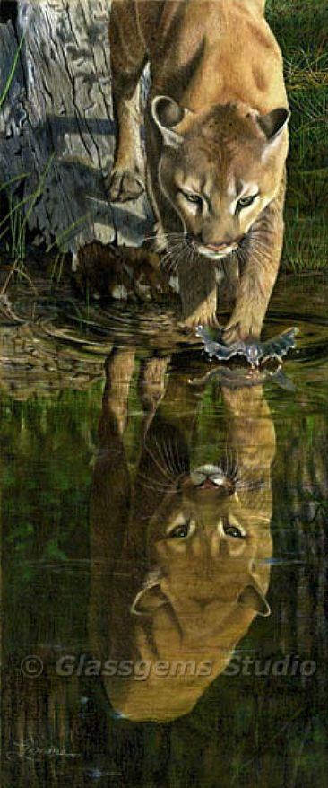 Reflections - Mountain Lion by Gemma Gylling