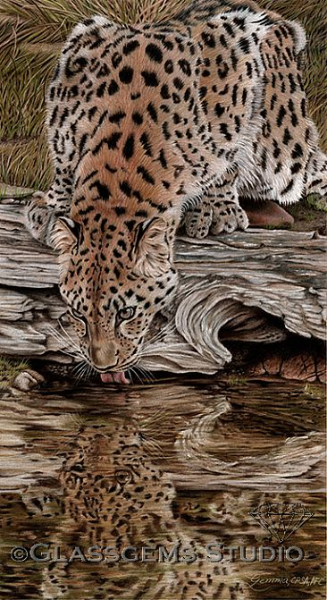Endangered Reflections - Amur Leopard by Gemma Gylling