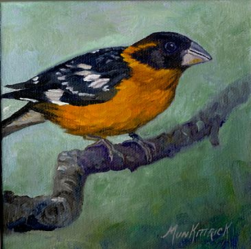 Black Headed Grosbeak - Black Headed Grosbeak by Dianne Munkittrick