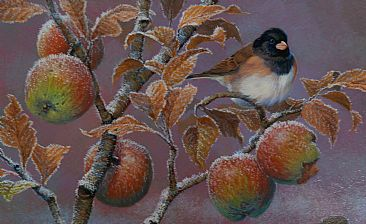 Junco and Frosted Apples - Oregon Junco by John Lofgreen