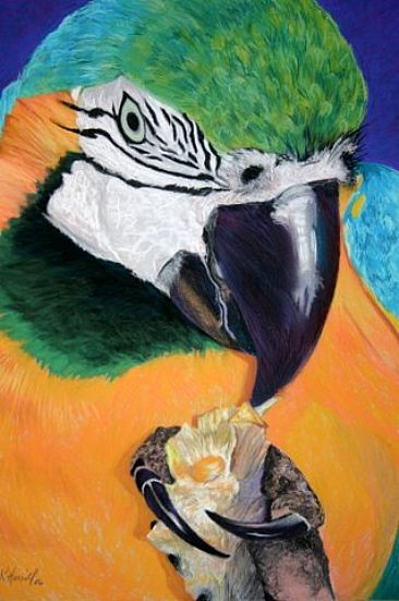 Arara canindé - Blue and Yellow Macaw by Kitty Harvill