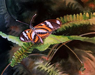 Heliconius ethilla narcaea - Brazilian butterfly by Kitty Harvill
