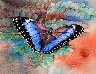Morpho helenor achillides - Brazilian butterfly by Kitty Harvill