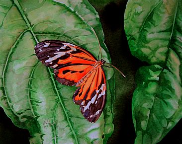 Lycorea halia - Brazilian butterfly by Kitty Harvill