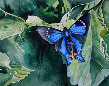 Rhetus periander eleusinus - Brazilian butterfly by Kitty Harvill