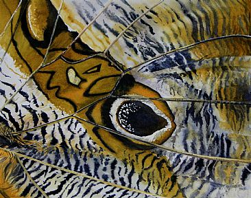 Olho da Coruja - Close-up of Owl butterfly wing by Kitty Harvill