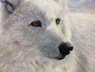 Arctic Gold - arctic wolf by Cindy Sorley-Keichinger