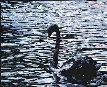 Black Serenity - Black New Zealand Swan by Cindy Sorley-Keichinger