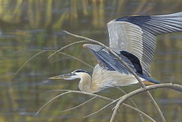 Breeze Through the Trees - Great Blue Heron by Cindy Sorley-Keichinger