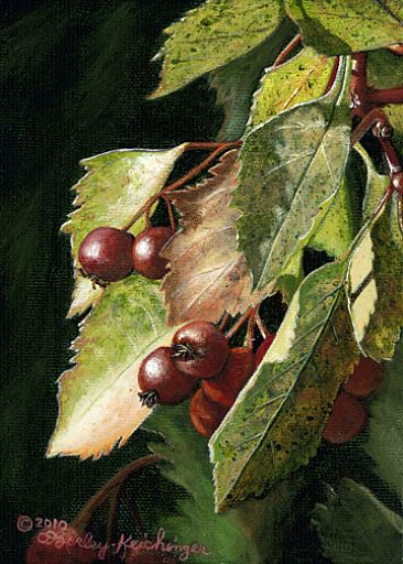 Fall Hawthorn - Hawthorn berries & leaves by Cindy Sorley-Keichinger