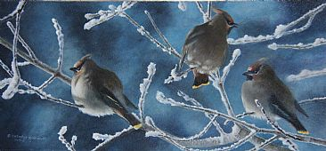 Frosty Morn - Bohemian Waxwings by Cindy Sorley-Keichinger