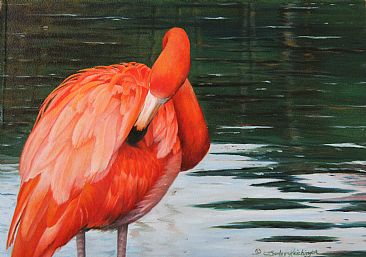 South American Red - South American Flamingo by Cindy Sorley-Keichinger