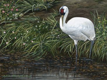 Contemplation of Love - Whooping Crane by Cindy Sorley-Keichinger
