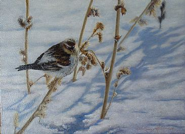A Touch of Frost - Hoary Redpole by Cindy Sorley-Keichinger
