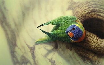 Rainbow Lorikeet  - Australian wildlife by Christopher Pope