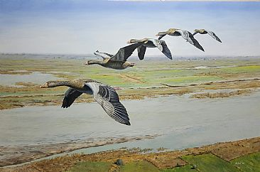 FLYING HIGH - Graylag geese by Ahsan Qureshi