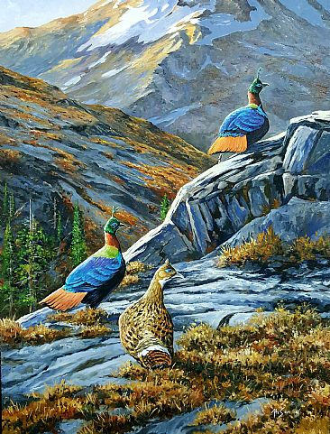 Evening accent - Himalayan Monal Pheasants by Ahsan Qureshi