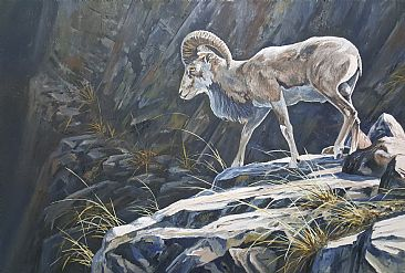 Over the rocks - Punjab urial by Ahsan Qureshi
