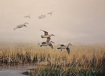 Misty marsh - Marbled teals by Ahsan Qureshi