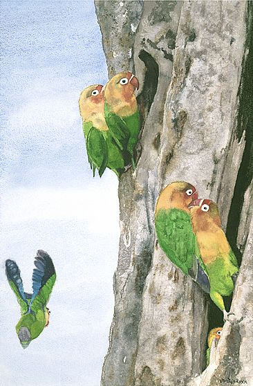 Lovebirds of Tanzania  - Fischer's lovebirds are from Tanzania by Linda DuPuis-Rosen