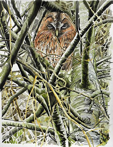 Tawny owl -  by Christian Dache