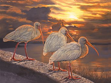 Mt Dora Sunset - White Ibis by Taylor White