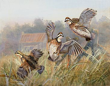 Old Home Place Quail - Flying  Quail Painting