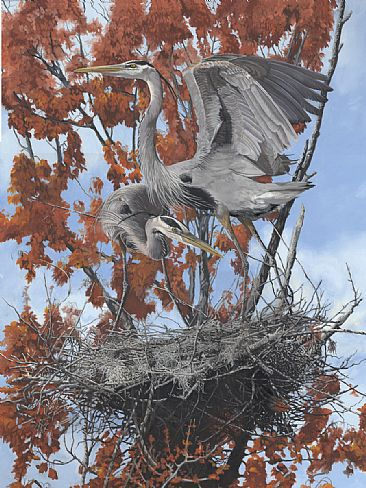 Spring Construction - Great Blue Heron by Taylor White
