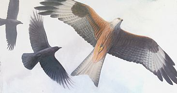 Mobbed - Red Kite by Mike Hughes