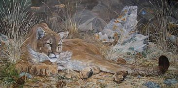 Distant Intrigue - Big Cats - Cougar by Jason Kamin