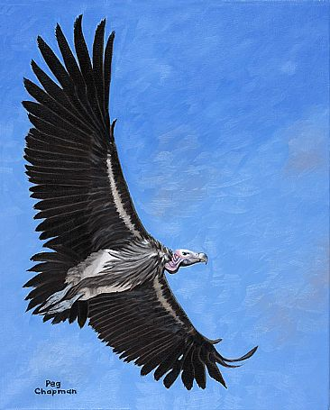 Riding the Sky - Lappett Faced Vulture by Peggy Chapman