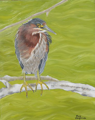 Heron of the Green - Green Heron in the Everglades by Peggy Chapman