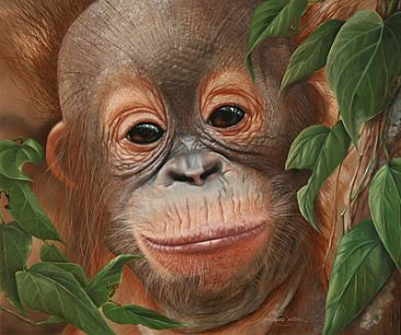 In Respect of the Orangutan - Orangutan juvenile by Michelle Caitens