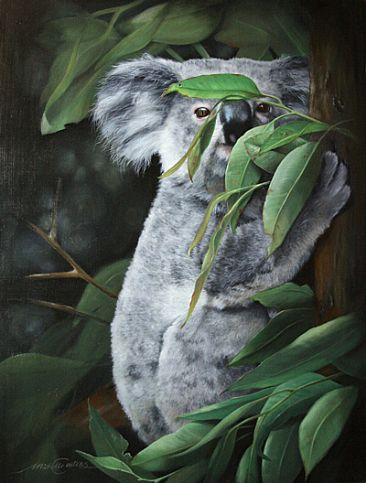 The Face Behind the Eucalypts II - Koala by Michelle Caitens