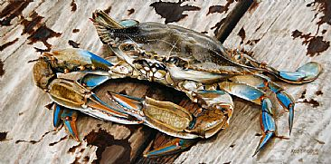 Portrait of a Blue Crab - Oversized Portrait of the Beauty of the Blue Crab by Rob Dreyer
