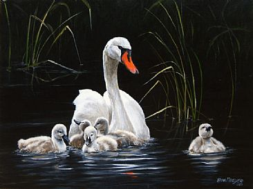 Paddling to a different drummer - Mute Swan and Cygnets by Rob Dreyer