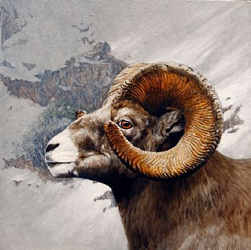 High Country Bighorn - Lifesize portrait of a Ram by Rob Dreyer