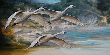 Ahead of the Storm - Trumpeter Swans in flight by Rob Dreyer