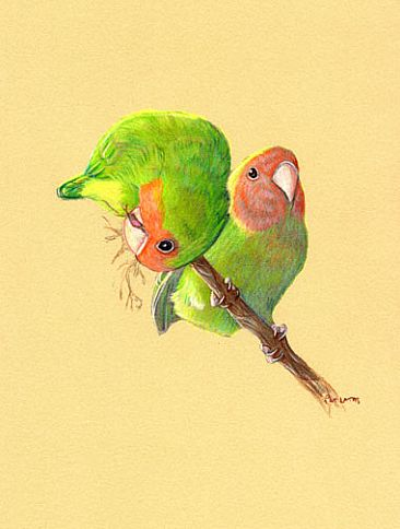 Lovebirds Early Morning - Peach-faced Lovebirds in the early sun by Pat Latas