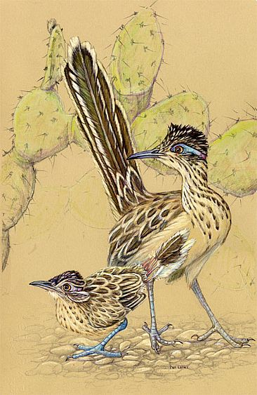 Roadrunner and offspring - Adult roadrunner and youngster in the Sonoran Desert by Pat Latas