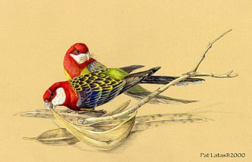 Eastern Rosellas - Eastern Rosellas by Pat Latas