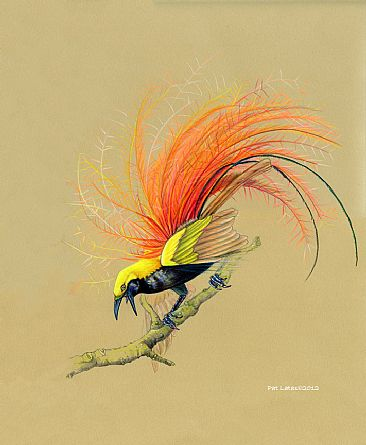 Goldie's Bird of Paradise - Bird of Paradise by Pat Latas