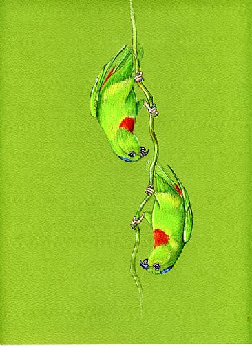 Hanging Parrots - Red-capped Hanging Parrots by Pat Latas