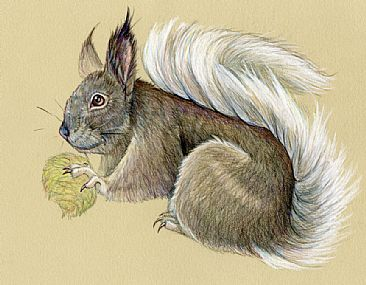 Kaibab Squirrel - Kaibab Squireel by Pat Latas