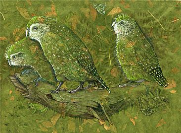 Kakapo Female and Chicks - Female Kakapo with two chicks by Pat Latas