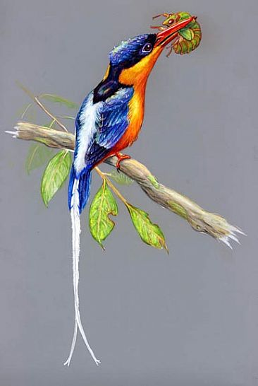 Paradise Kingfisher - Paradise Kingfisher by Pat Latas